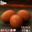【愛知●尾張】おいしい赤卵LLサイズ40個入り(10個破卵保障含)送料無料!赤卵/40個/養鶏場直送/食品/卵/ご自宅用/贈答用