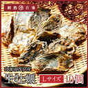 【産地直送!】生牡蠣(殻付き)10個 北海道 厚岸...