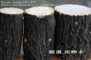 厳選産卵木(中目)