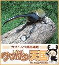 世界最大級カブトムシの王様◆ヘラクレスヘラクレス成虫オス125mmUPペア※オス・メスセット商品!!