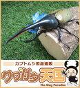 世界最大級カブトムシの王様◆ヘラクレスヘラクレス成虫オス135mmUPペア※オス・メスセット商品