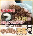 国産カブト幼虫3頭付き!◆きのこMat10L!幼虫無料!クワガタでも、カブトムシでも使えて幼虫も大きく育つ脅威のプロ…
