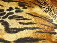 現品限り ストレッチサテン生地 布 動物柄 アニマル柄 アニマルハンター 170374スカート ワンピース 舞台衣装 ハロウィン クリスマス 発表会 学園祭 文化祭 運動会 コンサート パーティー