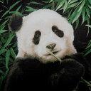 シーチング生地 布 Giant pand