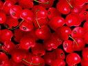 USAコットン 生地 Fresh Squeezed Cherries Black 8386-12 サクランボ フレッシュスクィーズ チェリー 写真調 フェイク イミテーション KANVAS カンヴァス Benartex ベナーテックス 商用利用可能
