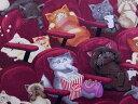 USAコットン 生地 布 スカレディーキャッツ C8141Wine 入園入学 恐がりのネコ 猫 ねこ タイムレストレジャーズ 商用利用可能10P03Dec16