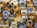 USAコットン 生地 布 キャットロウ C3256Natural 入園入学 猫 ネコ キャット タイムレストレジャーズ 商用利用可能