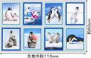 パネル柄 USAコットン 生地 布 パーキーペンギンズ AVT16567-205 ロバートカフマン Perky Penguins ROBERT KAUFMAN 約110×60cm ロバートカウフマン 商用利用可能