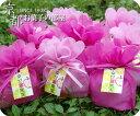 ハッピーフルーツで笑顔のおすそわけ!【ホワイトデーお返し】お花バッグ 幸せの果実 2袋セットALL10Feb09