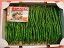 京野菜 最高ランク品 伏見甘長とうがらし(1kg)