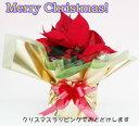 【クリスマス送料無料】 ポインセチアX'masラッピング【送料無料】【格安】【smtb-k】【ky】【綺麗】【ギフト包装無料】人気商品