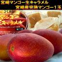 【送料無料】宮崎マンゴー贅沢セット宮崎からの極上産地直送!今年も激ウマ宮崎完熟マンゴーとマンゴー生キャラメルをセットにしてお届け致します♪コチラの商品は5月下旬頃のお届けとなります
