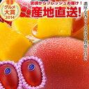 【送料無料】宮崎完熟マンゴー中玉2玉入り宮崎からお届けする南国の香り・とろける美