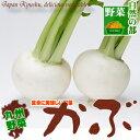 【九州 野菜】九州産かぶ2株(カブ)はなまるでも紹介されたカブには、胃腸を温め淡色野菜でビタミンCを多く含み、でんぷん消化酵素のアミラーゼを含んでいます♪冬のポカポカ食材としても人気です♪