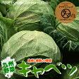 【野菜/九州】九州産キャベツ(1玉)シャキッと旨い九州自慢の元気野菜!九州から新鮮・激安特価でお届け致します!【国産野菜】【新鮮生やさいきゃべつ】Japan vegetables cabbage