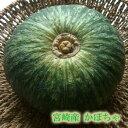 【宮崎産 新鮮野菜】直送!えびすかぼちゃ