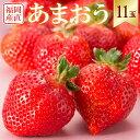 【福岡産 原さん家のあまおう苺】いちご11玉(1パック)