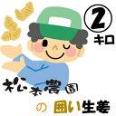 【囲い生姜】ひねしょうが2Kg【ご注文受付中!】送料無料【長崎県有明産】