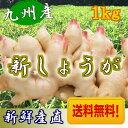 【送料無料】新しょうが 平成28年産【新生姜】新しょうが1kg 【長崎県産 ショウガ】甘酢漬けなどに