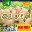 【送料無料】新しょうが 平成28年産【新生姜】新しょうが2kg 【長崎県産 ショウガ】甘酢漬けなどに