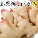 【送料無料】新しょうが 平成30年産【新生姜】新しょうが2kg 【長崎県産 ショウガ】甘