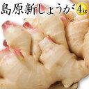 【送料無料】新しょうが 平成30年産【新生姜】新しょうが4kg 【長崎県産 ショウガ】甘