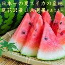 【大玉2玉入】【秀3L〜5L】尾花沢スイカ 尾花沢すいか 尾...
