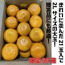 有田みかん 3kg 画像3