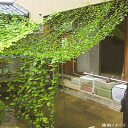 DAIM[第一ビニール] 緑のカーテン 5m吊下げ 【W1800×H5000mm】 グリーンカーテン