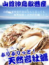 牡蠣 カキ 天然岩牡蠣(活) 1キロセット4〜6個  鳥取産 朝採れ 刺身用 !(岩ガキ/岩がき) 2セット以上ご購入でもう1セット増量!