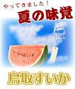 予約 鳥取すいか《送料無料》ご自宅用 大6~8キロ!スイカの本場鳥取県産フルーツ 贈り物 送料無料