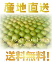 鳥取県産 二十世紀梨 L〜3Lサイズ 10kg詰 梨ご自宅用...