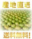 予約!鳥取県産 二十世紀梨 5kg詰 梨 ご自宅用 訳あり梨(優品) 1配送先に付き2セットご購入でもう1セット増量中(L〜3Lサイズ 13〜18個)