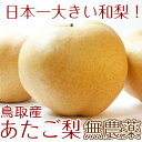鳥取県産 最高級(赤秀)期間限定値下げ!あたご梨 愛宕梨5玉 超特大 5kg 有機栽培