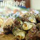 鳥取沖産(活)天然サザエ 計2キロ( 25〜30個入)さざえ 刺身用 山陰沖 お中元 送料無料