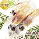 ほたるいか(2019新物)刺身用【マイナス60℃で冷凍】(最高級品)たっぷり1キロ 250g×4パッ