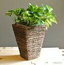 【鉢カバー】 シンプルなデザインの スクエアー型鉢カバー 6号サイズ 敬老の日 ポイント消化 観葉植物