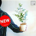 【 観葉植物 】【季節限定商品】 ユーカリ・グニー苗 苗から育てよう♪ 3号サイズ ユーカリプタス フトモモ