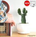 【多肉植物】 サボテン 大雲閣白色丸型陶器鉢に植えた コンパクトな 柱サボテン セレウス カクタス C4カクタス