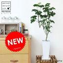 New!! ポリシャス 白色スリム陶器鉢に植えた ナチュラルな タイワンモミジ table green series 敬老の日 ポイント消化 観葉植物
