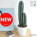 new!! 柱サボテン 白色シンプルデザイン陶器鉢に植えた
