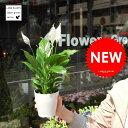 【元気な苗が再入荷!】 スパティフィラム 白の美しい花を咲かせる観葉植物table green series