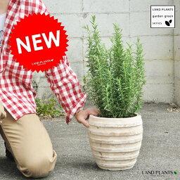 【ガーデングリーン】【ハーブ】 ローズマリーアンティークブラウン鉢の 鉢植えローズマリーGarden green series 虫除け 虫よけの木 立性