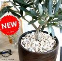 オリーブの木 中型 ウッド風 ペイント陶器鉢 Mサイズ 植木鉢 オリーブ 苗 苗木 鉢 植木 観葉植物 庭木 挙式用 結婚式 茶 こげ茶 ダークブラウン ブラウン