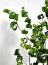 一覧イメージ - LAND PLANTS 楽天市場店