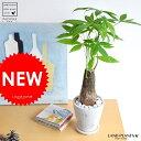 風合いのある白色陶器の 幹太パキラ 発財樹 敬老の日 ポイント消化 観葉植物