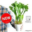【お試し】 ポリポジウム 4号 白色 プラスチック鉢 観葉植物