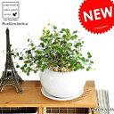 RoomClip商品情報 - NEW!! ワイヤープランツ 白色丸型陶器に植えた つる性の植物 ワイヤーバイン table green series 敬老の日 ポイント消化 観葉植物