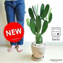 NEW!! ウチワサボテン 茶色エッグポット植えた バンザイサボテン 多肉植物・カクタス・C4カクタス・墨鳥帽子 敬老の日 ポイント消化 観葉植物