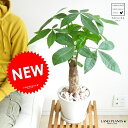 ゴージャスです! 切れ込み葉っぱが魅力のエキゾチックな観葉植物です♪